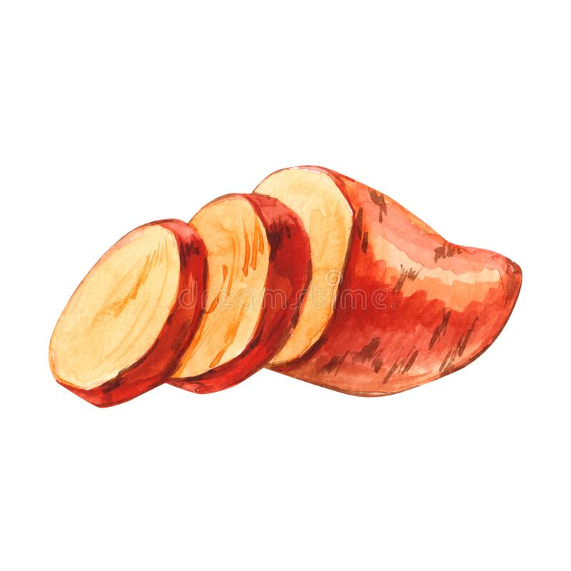 Watercolor cuted slice sweet potato hand drawn illustration isolated on white. Background royalty free illustration