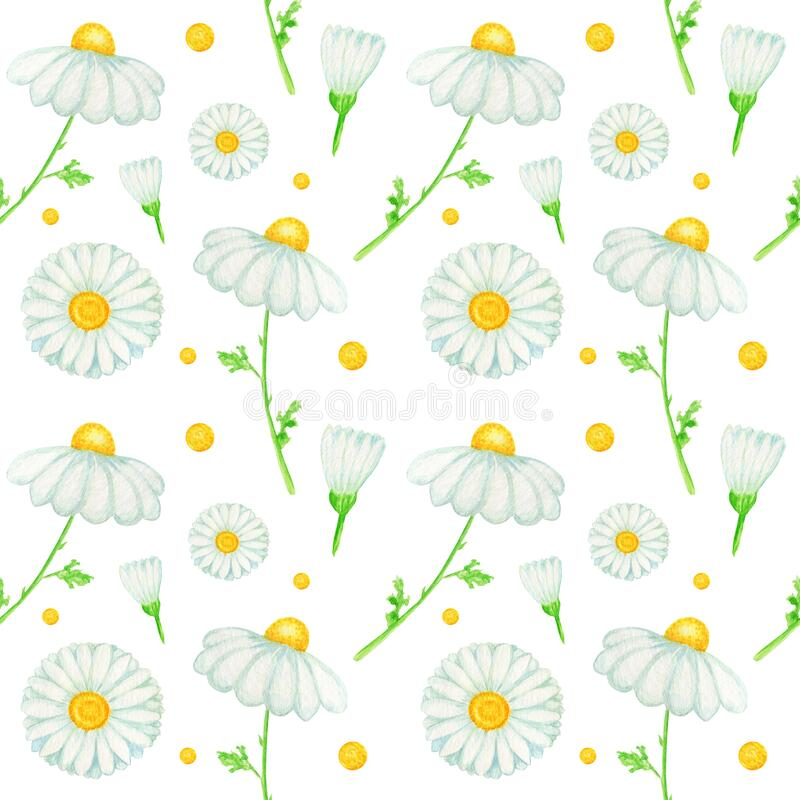 Free Watercolor Daisy Chamomile Flower Seamless Pattern Illustration. Hand Drawn Botanical Herbs On White Background Stock Photos - 186289453