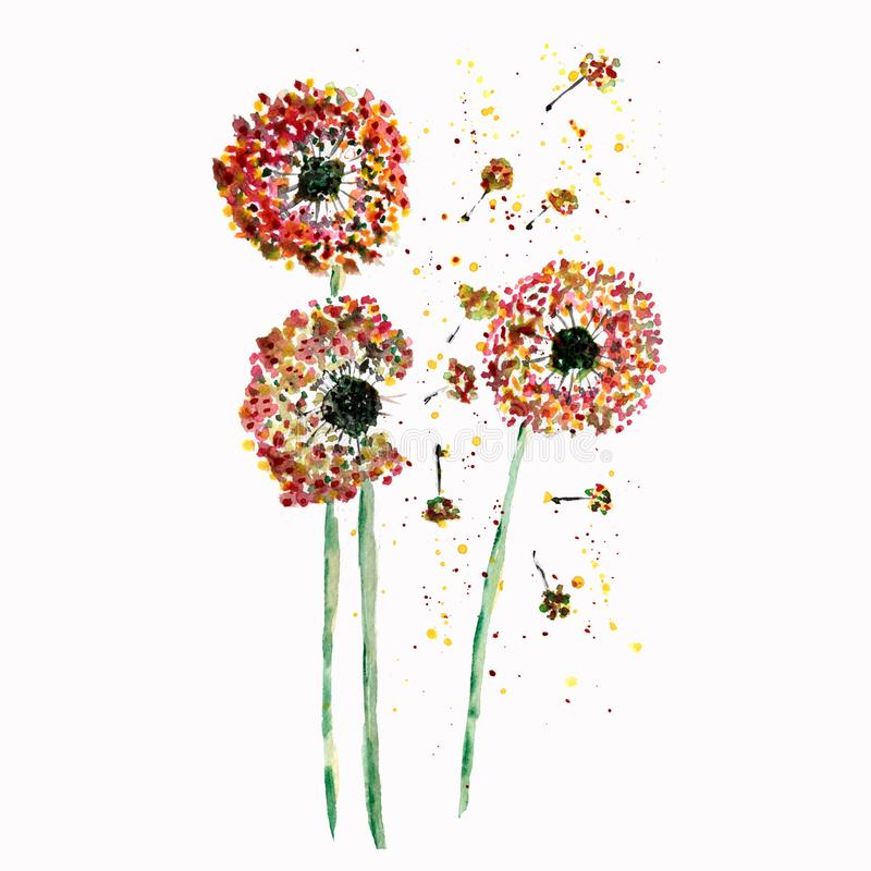 Watercolor dandelion flower abstract background. hand watercolor.perfect for cards, cover, textile, etc. royalty free illustration