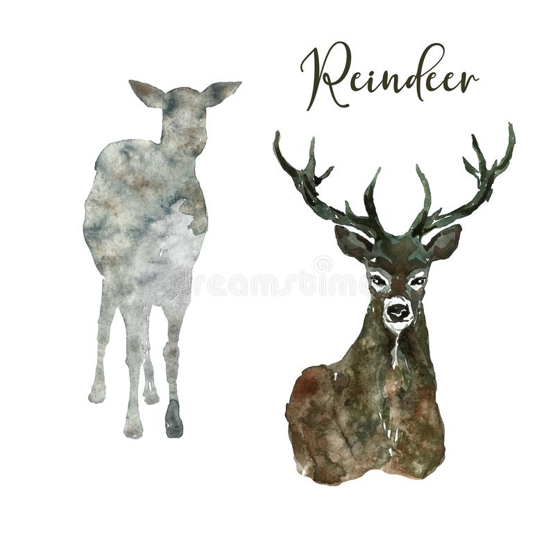 Watercolor deer animal hand drawn illustration. Reindeer with horns and silhouette of wild forest animal, isolated. Watercolor reindeer illustration. Hand stock photo