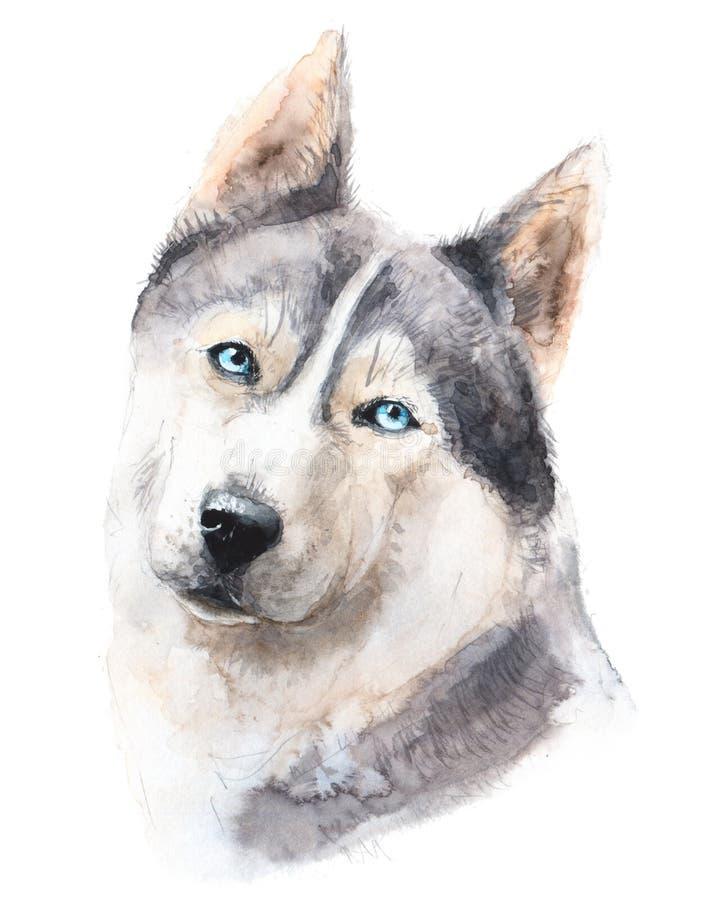 Watercolor dog illustration. Portrait husky with beautiful blue eyes. royalty free stock image