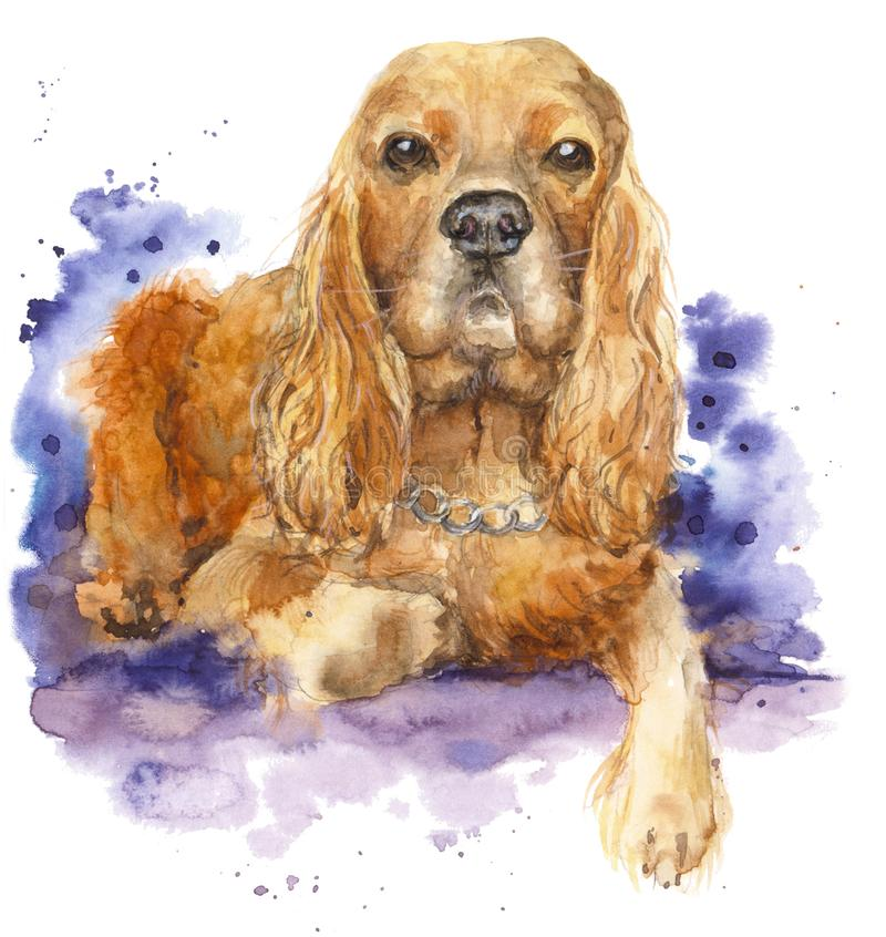 Watercolor dog portrait. Red head Spaniel. royalty free stock photos