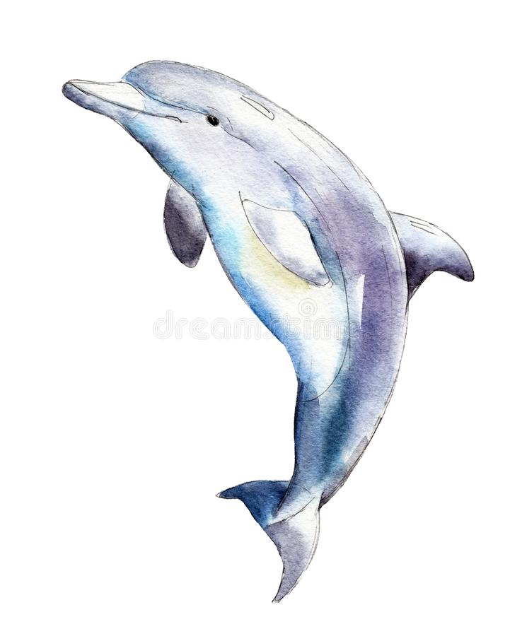 Watercolor dolphin, hand-drawn illustration isolated on white. stock illustration