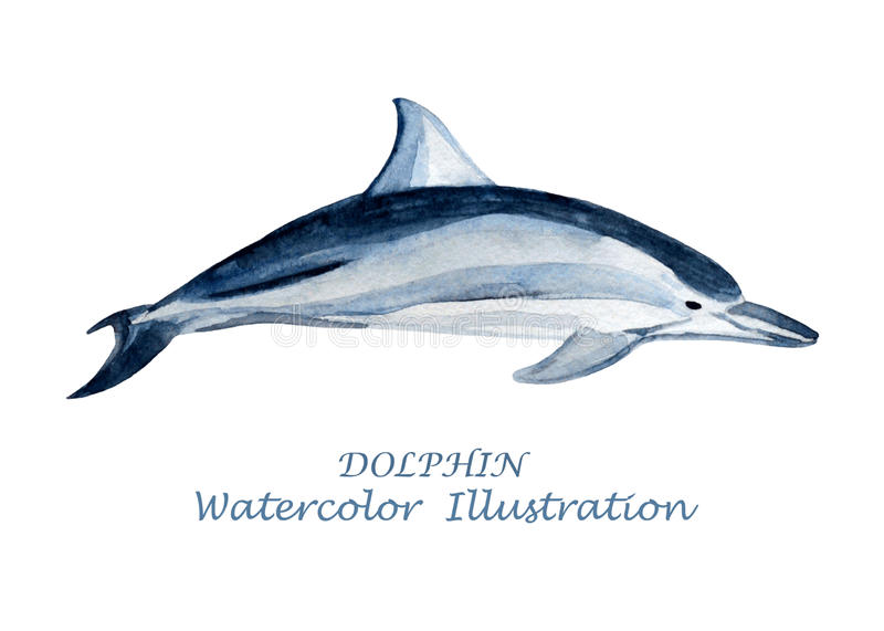 Watercolor dolphin illustration. royalty free illustration