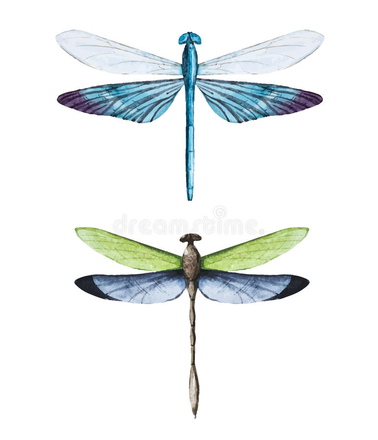 Watercolor dragonflies royalty free illustration
