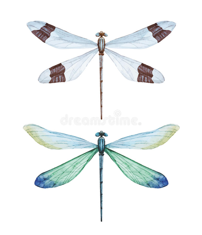Watercolor dragonflies stock illustration