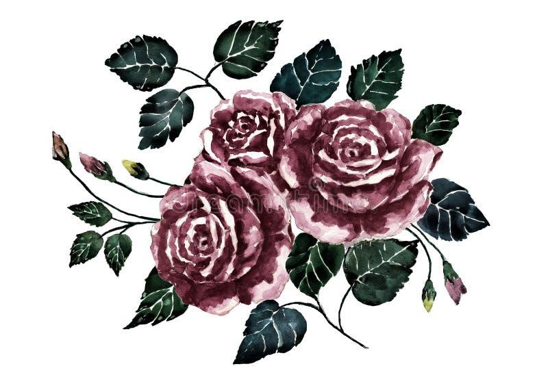Watercolor drama rose.Dark bouquet flower.Hand painted art .Illustration of valentine mood. Watercolor drama rose.Dark bouquet flower.Hand painted art.Isolate on royalty free illustration