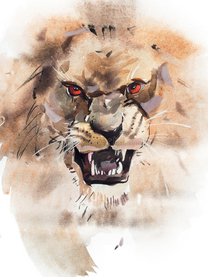 Watercolor drawing of angry looking lion. Animal portrait on white background. vector illustration