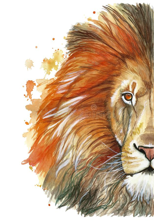 Watercolor drawing of an animal mammal animal predator of a red lion, red mane, lion-king of beasts, portrait of greatness, streng. Th, kingdom, india, in front stock illustration