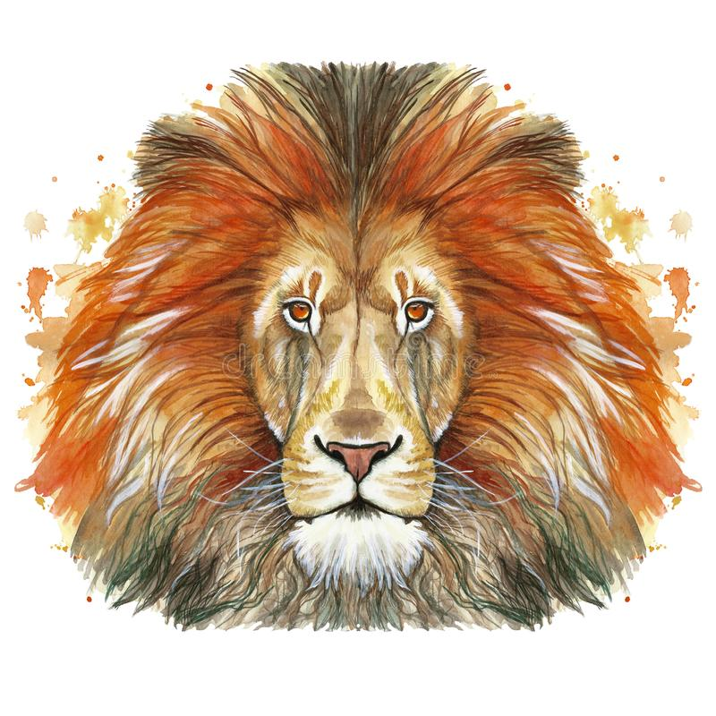 Watercolor drawing of an animal mammal animal predator of a red lion, red mane, lion-king of beasts, portrait of greatness, streng. Th, kingdom, india, in front vector illustration