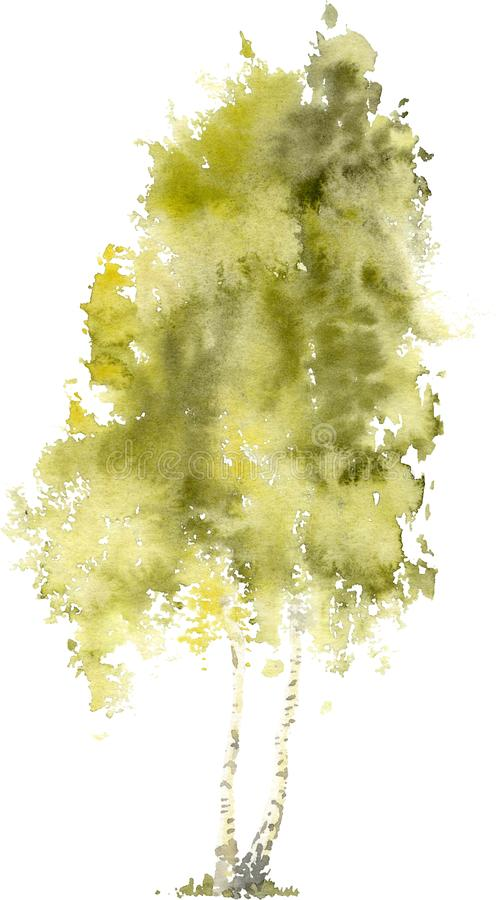 Watercolor drawing of Birch in the summer stock photography