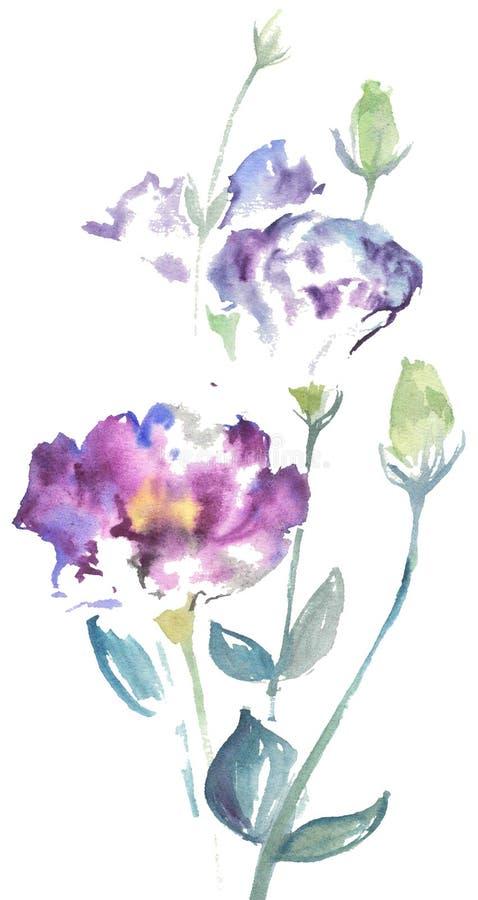Watercolor drawing of blue flower Lizantus. stock photo