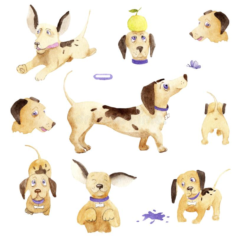 Watercolor drawing dachshund in various poses, set stock illustration