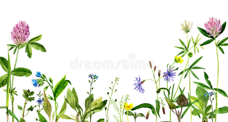 Watercolor drawing flowers and herbs stock illustration