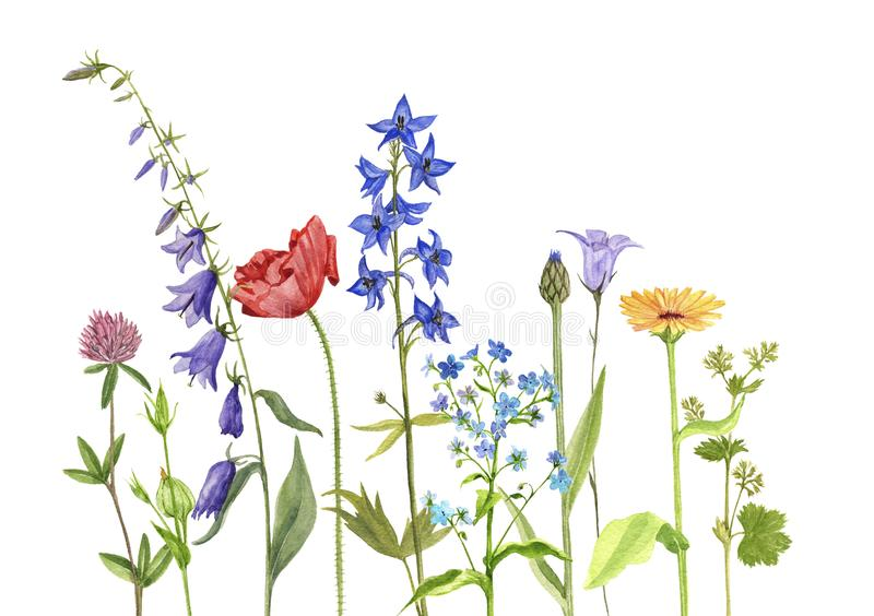 Watercolor drawing flowers and plants vector illustration
