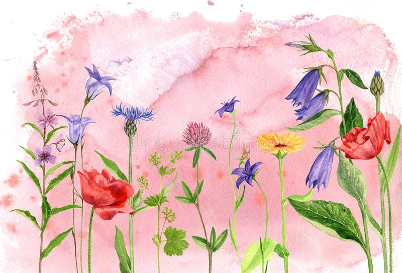 Watercolor drawing flowers and plants stock illustration