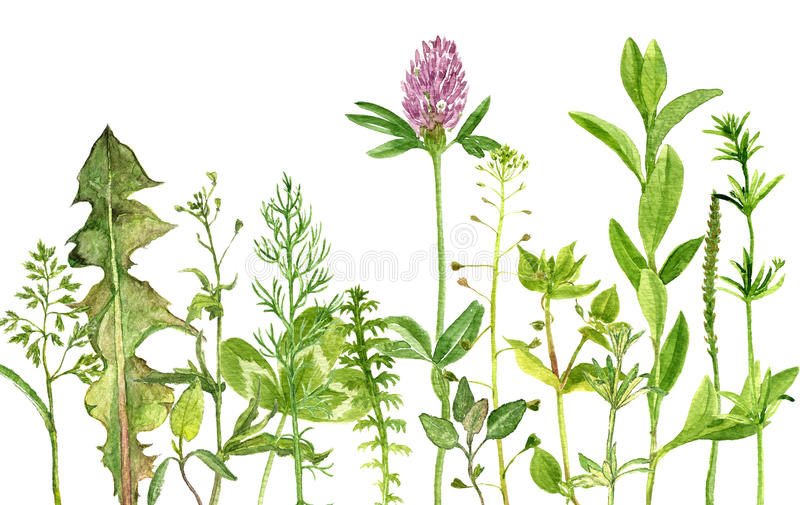 Watercolor drawing herbs and flowers stock illustration for Plants de fleurs