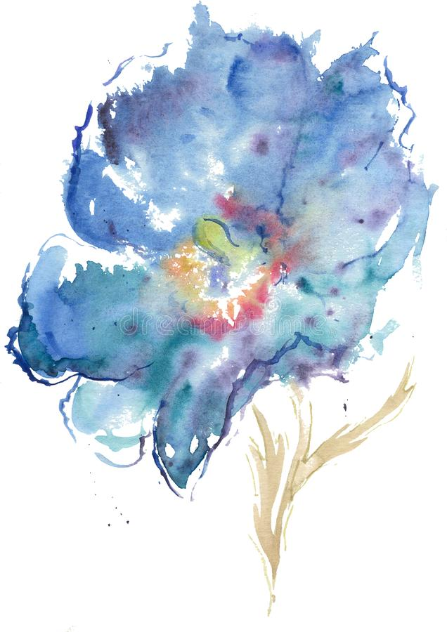 Watercolor drawing of Himalayan blue poppy royalty free stock photography