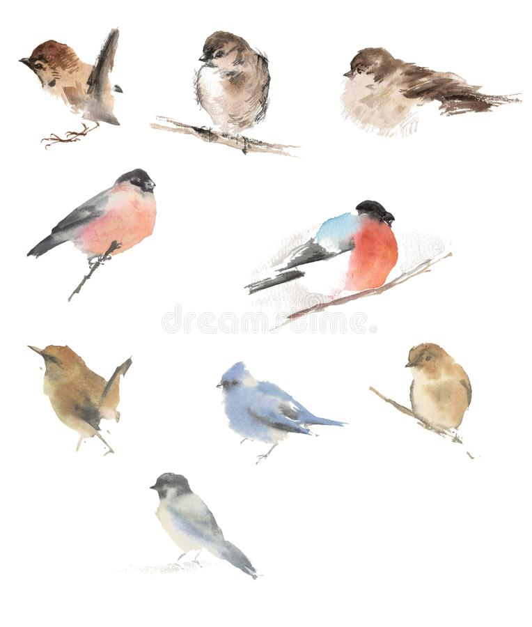 Watercolor drawing, illustration. Birds in different poses. royalty free stock photography