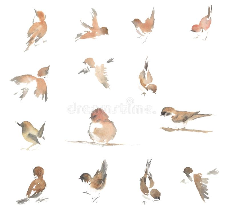 Watercolor drawing, illustration. Sparrows in different poses. stock illustration