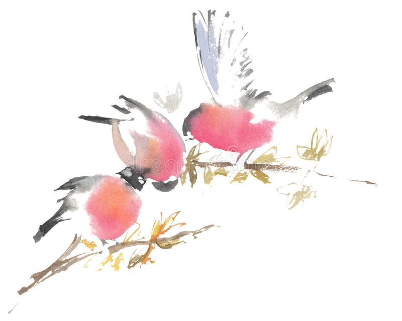 Watercolor drawing, illustration. Three bullfinches on a branch stock images