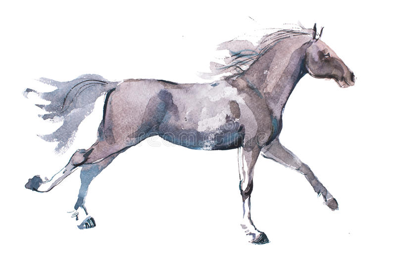 Watercolor drawing of jogging horse, young mustang doing dogtrot aquarelle painting royalty free illustration