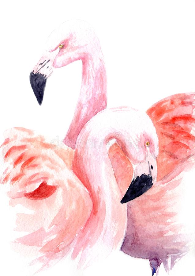 Watercolor drawing of a loving pair of pink flamingos vector illustration