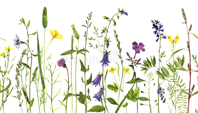 Watercolor drawing plants royalty free illustration