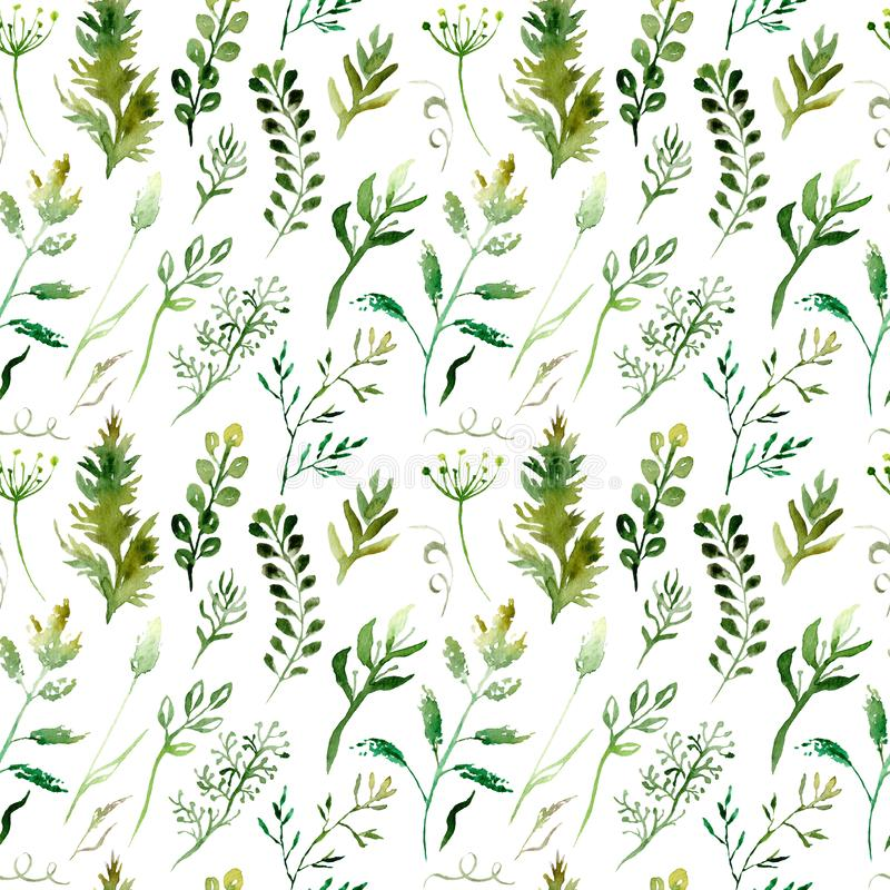 Watercolor drawing seamless pattern of field plants, flowers and herbs vector illustration