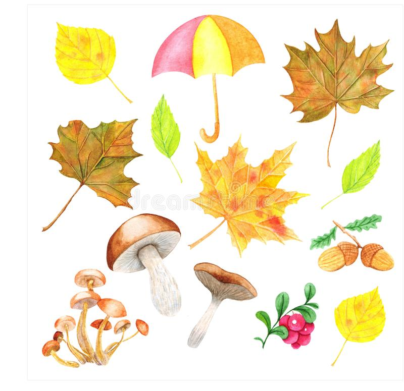 Watercolor drawing, set of autumn elements isolated on white - dry leaves, acorns, mushroom, multicolor umbrella illustration. Watercolor drawing, set of autumn stock illustration