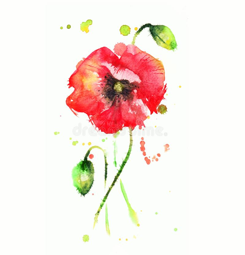 Red poppy. Watercolor drawing with splashes and streaks of a red poppy flower royalty free illustration