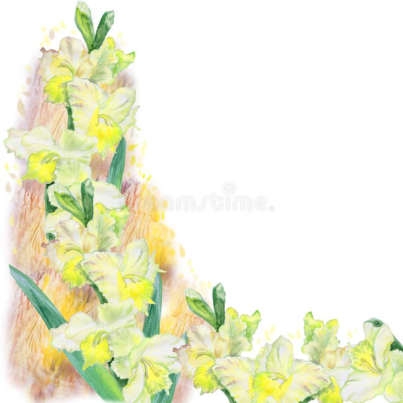 Watercolor drawing of spring gladiolus flowers. Hand drawn painting of beautiful sword lily plant. Spring flowers bouquet. vector illustration