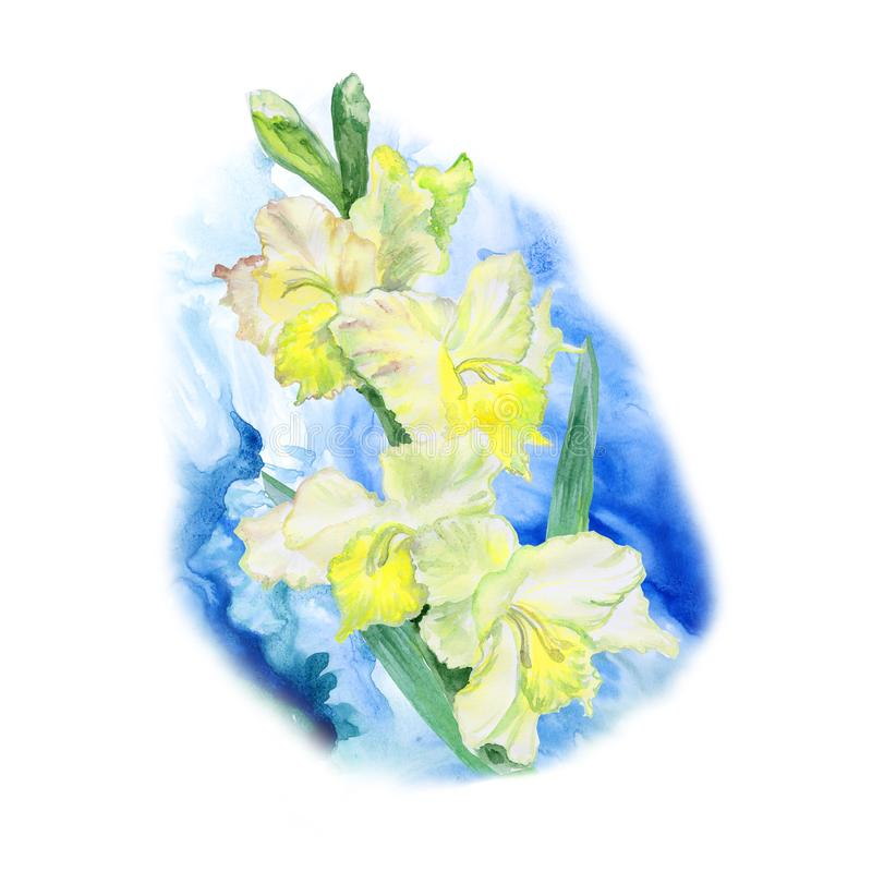 Watercolor drawing of spring gladiolus flowers. Hand drawn painting of beautiful sword lily plant. Spring flowers bouquet. stock illustration