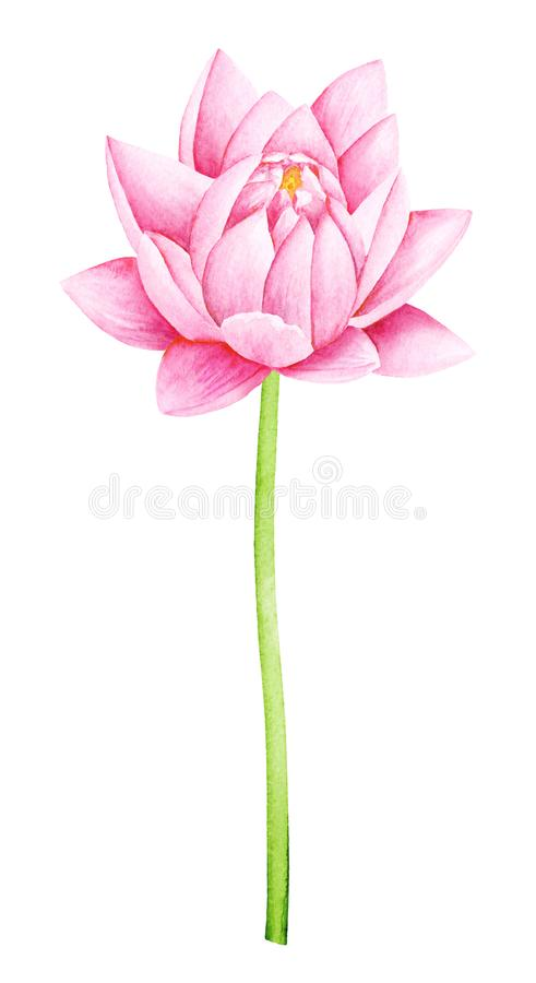 Beautiful Pink Lotus Flower. Watercolor illustration. Pure Water Blossom. stock image