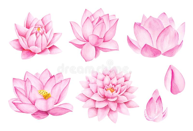Beautiful Pink Lotus Flowers. Watercolor illustration. Pure Water Blossom. stock image