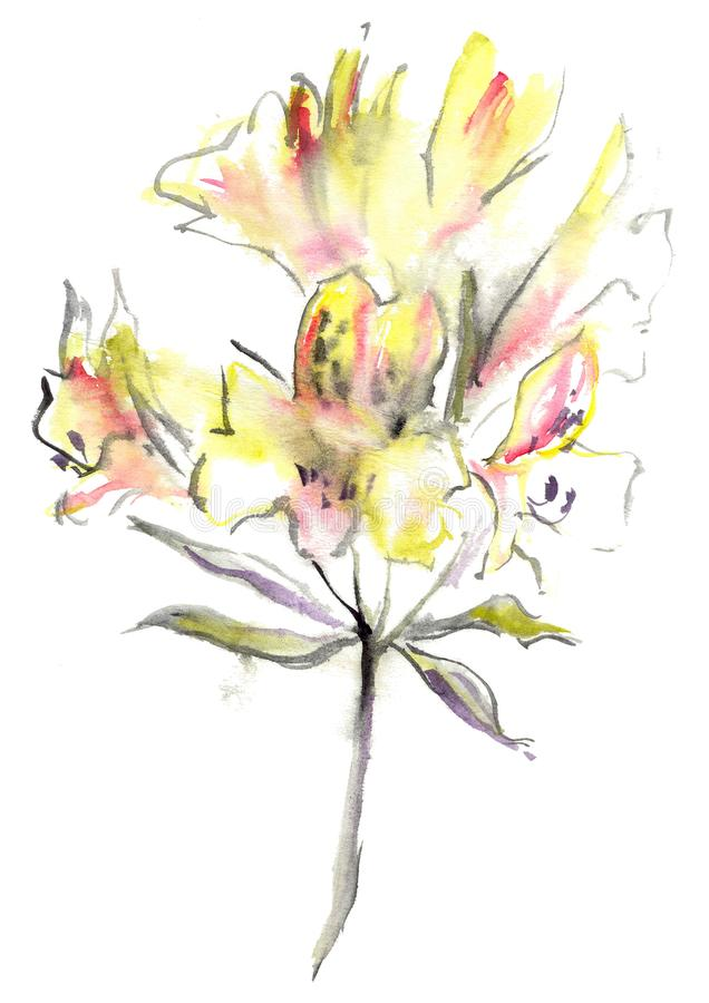 Watercolor drawing of yellow Alstroemeria stock photography