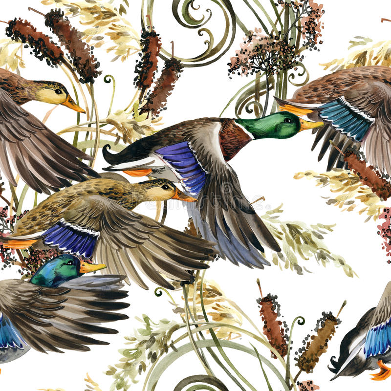 Watercolor duck mallard and water plant seamless. Pattern. hunting season. lacustrine background vector illustration