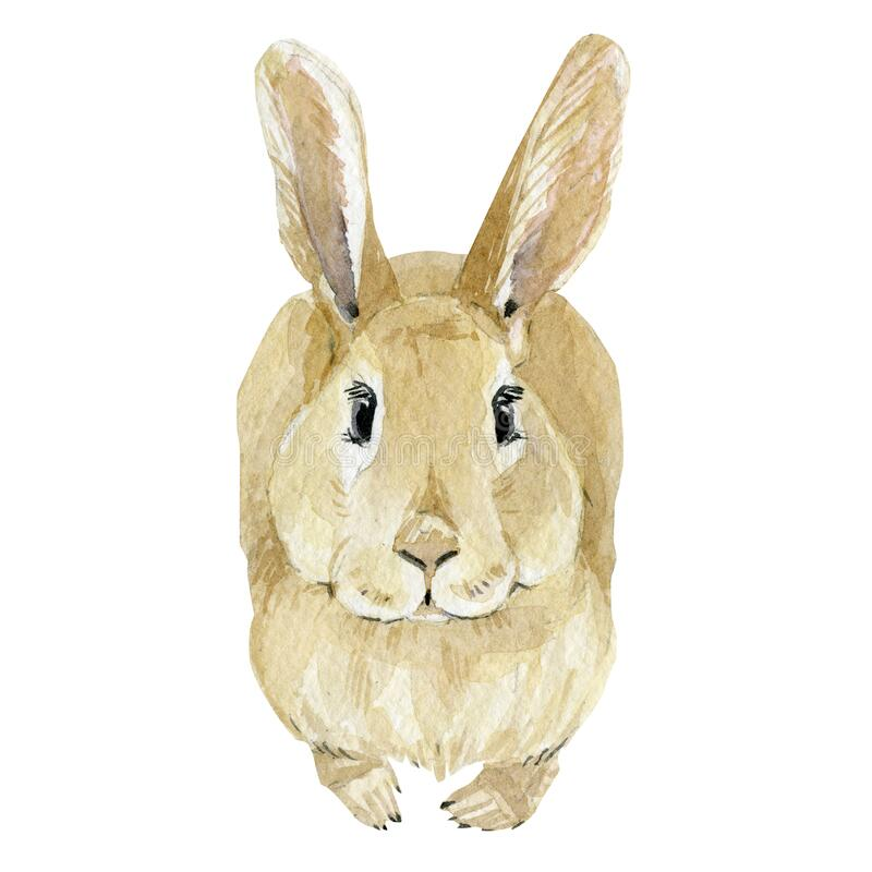 Watercolor Easter rabbit. Hand drawn clipart animal forest. Watercolor painting funny bunny, honey. Baby animal. Illustration stock images