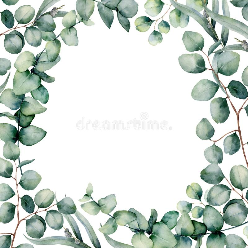 Watercolor eucaliptus leaves frame. Hand painted baby, seeded and silver dollar eucalyptus branch isolated on white royalty free illustration