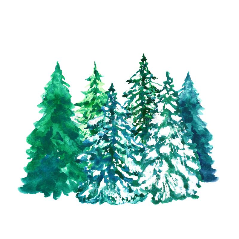 Watercolor evegreen pine trees illustration with snow, isolated on white background. Winter forest landscape vector illustration