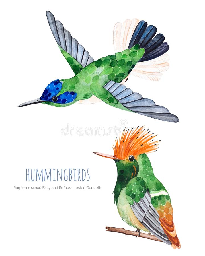 Watercolor exotic birds collection. stock illustration