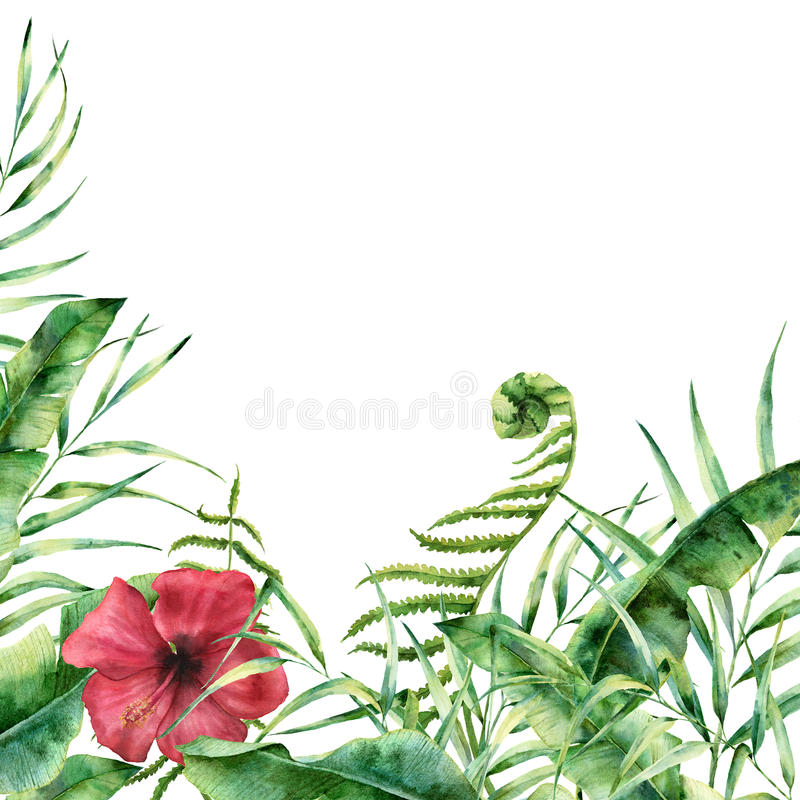 Free Watercolor Exotic Floral Card. Hand Painted Tropic Frame With Palm Tree Leaves, Fern Branch, Banana And Magnolia Leaves Stock Photo - 92416900