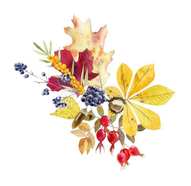 Watercolor Fall Arrangement Of Foliage And Fruit Stock ...