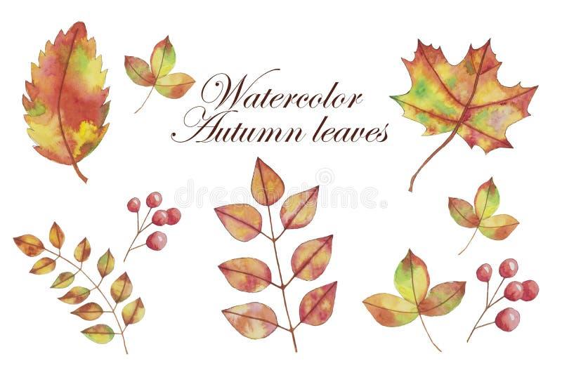 Watercolor fall, autumn yellow, orange leaves, hand drawn design elements stock illustration
