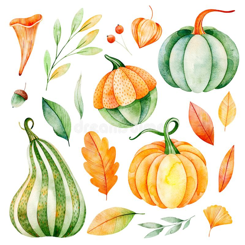 Watercolor fall leaves, branches,pumpkins etc. Lovely Autumn collection.Handpainted watercolor elements.Watercolor fall leaves, branches,pumpkins etc.Perfect for royalty free illustration