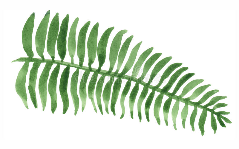 Watercolor Fern Painting. Watercolor painting of a green fern leaf. Isolated on white background royalty free illustration