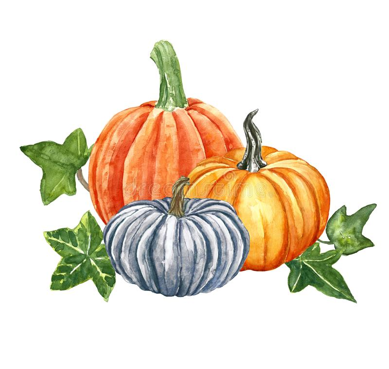 Watercolor festive pumpkins composition, isolated on white background. Autumn harvest, fall ripe orange vegetables and green ivy stock illustration