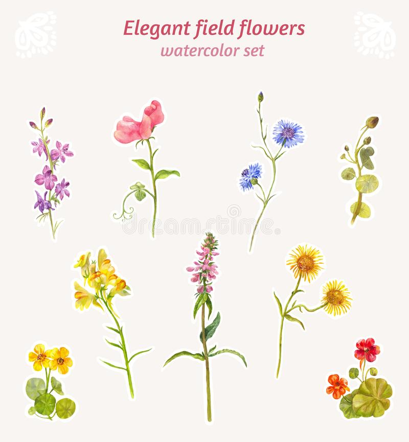 Watercolor field flowers. Set of elegant floral elements royalty free stock photos