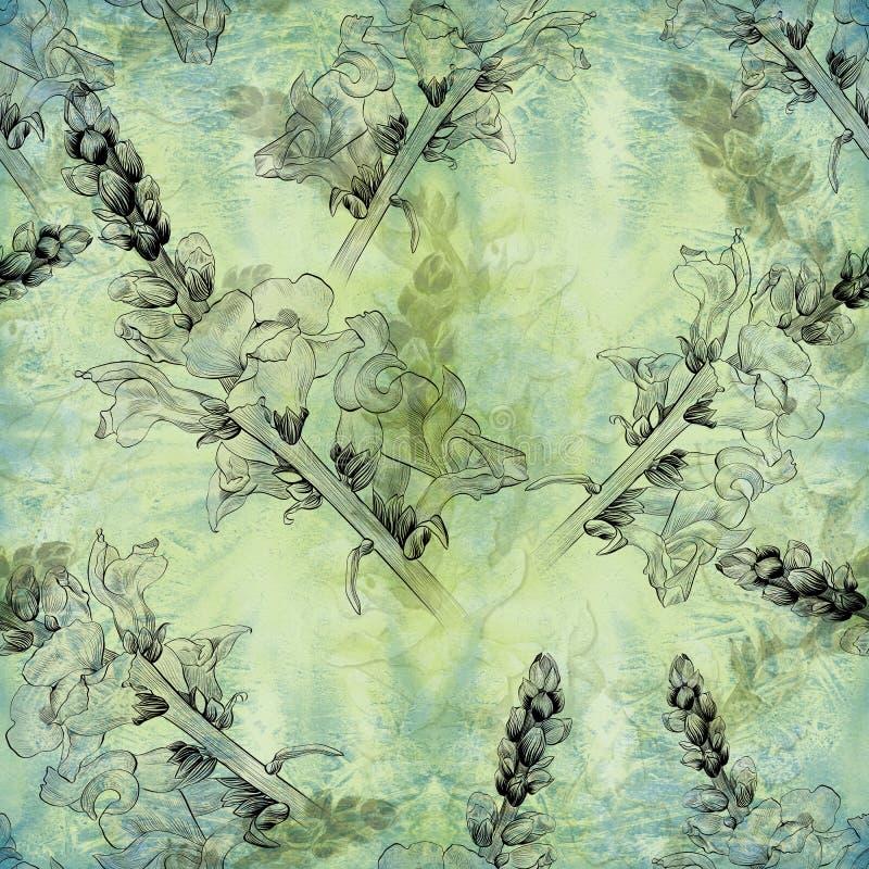 watercolor Fleurs Une branche avec des fleurs et des bourgeons - muflier Configuration sans joint Usines médicinales, de parfum e illustration stock