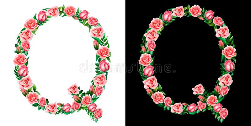 Watercolor floral alphabet of roses, Monogram, capital letter Q isolated on black and white background. Watercolor floral alphabet of roses, Monogram, capital royalty free stock image